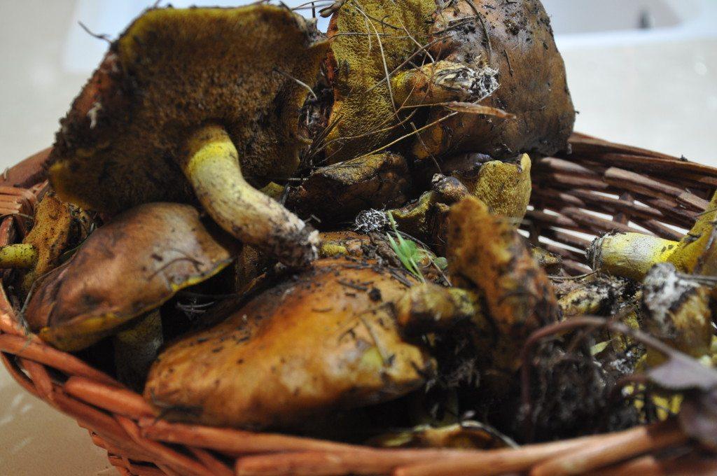 מרק אורניות - מרק פטריות יער